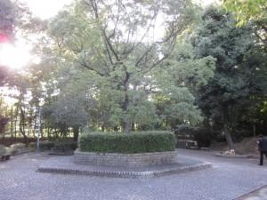 西河原公園の木
