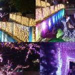 いばらき光の回廊!2014年